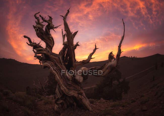 Strahlender Abendhimmel über einem wunderbaren toten Baum in herrlicher Landschaft an der Westküste der USA — Stockfoto