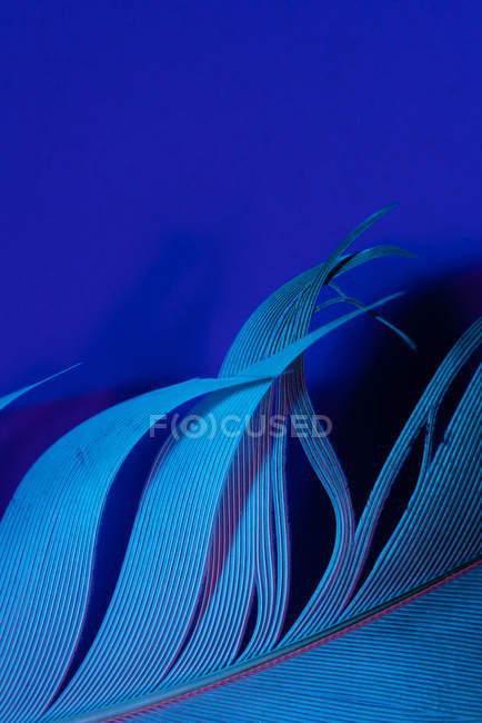 Detalle de pluma de pájaro en iluminación violeta - foto de stock
