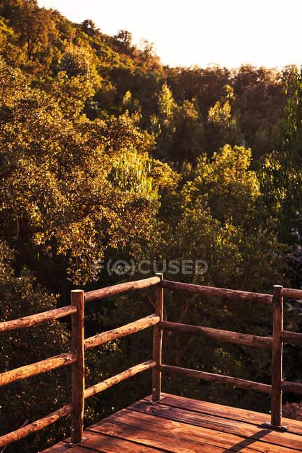 Точка спостереження на дерев'яній платформі з парканом і вид на густий сонячний ліс з великими гілками і рясним листям ввечері. — стокове фото