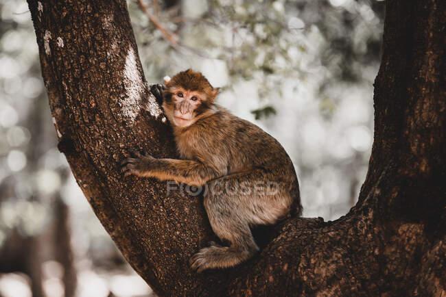 Pequeño mono lindo sentado en la rama del árbol sobre fondo borroso - foto de stock