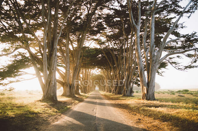 Narrow countryside road going through amazing tree tunnel on sunny day in beautiful nature — Stock Photo