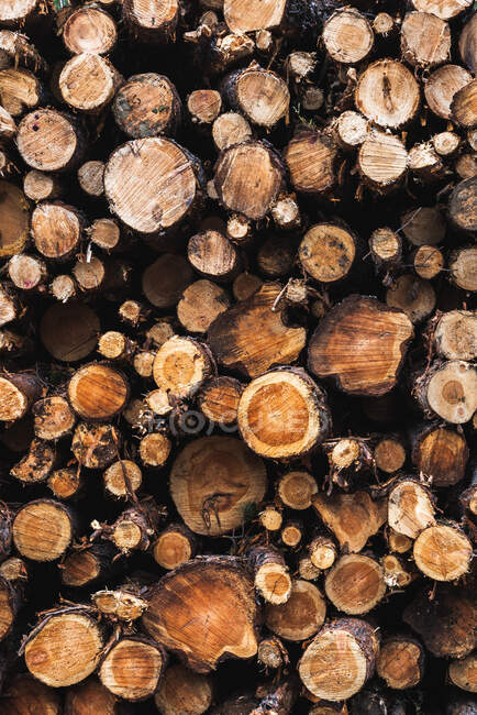 Closeup view of heap of wooden logs of different diameter — Stock Photo