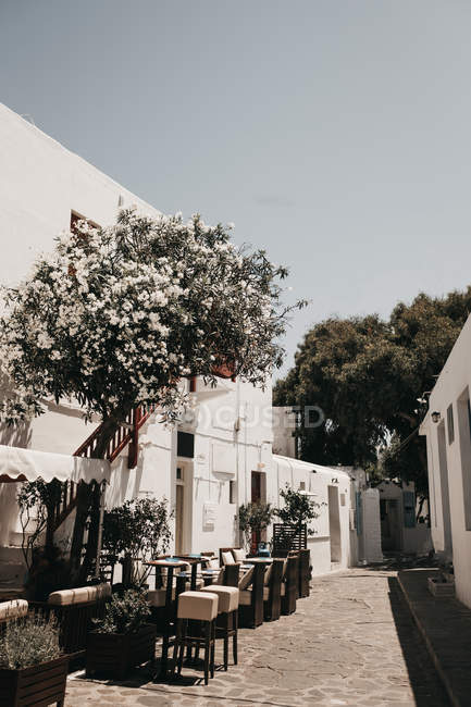 White buildings and blooming tree in yard in Mykonos, Greece — Stock Photo