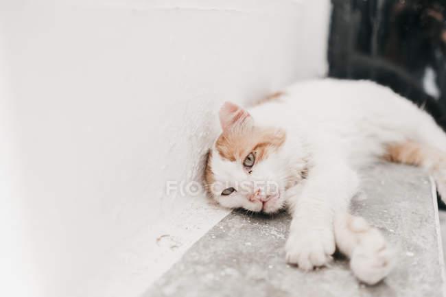 Забавный кот с белым и бежевым рисунком, лежащий на лестнице — стоковое фото