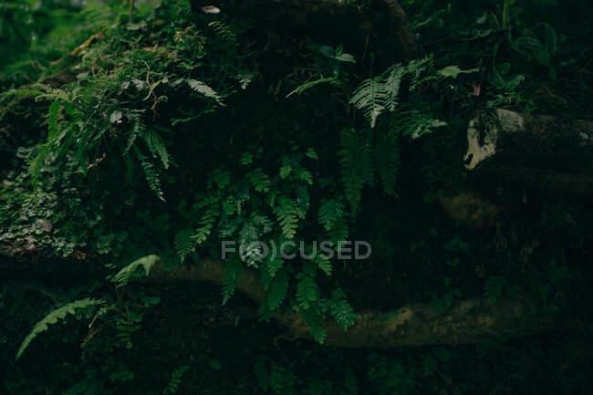 Piante verdi che crescono sulla pietra — Foto stock