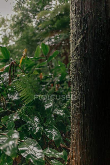 Tronc d'arbre dans la forêt — Photo de stock