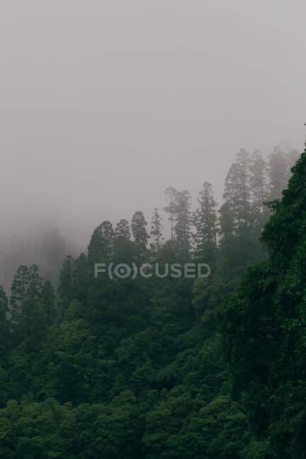 Alberi coperti di nebbia — Foto stock