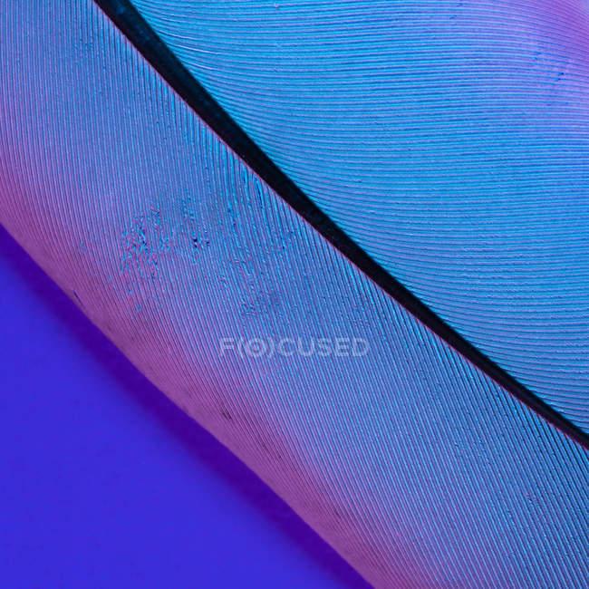 Textur der Vogelfeder auf hellviolettem Hintergrund — Stockfoto