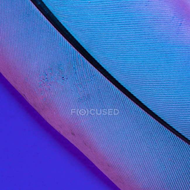 Textura de pluma de pájaro sobre fondo violeta brillante - foto de stock