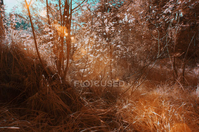 Plants growing in sunny forest in infrared color — Stock Photo