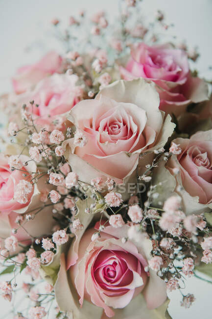 Closeup from above view of bunch of beautiful light pink roses — Stock Photo