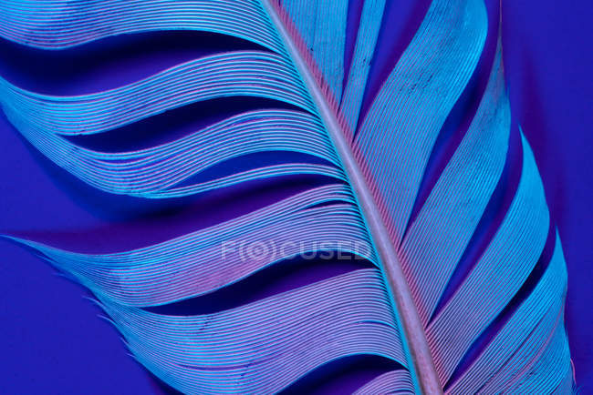 Close-up of bird feather in violet illumination — Stock Photo