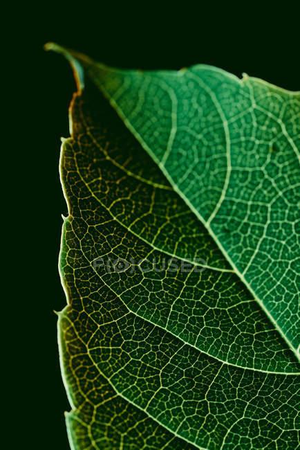 Макрорівні зелений лист текстури з вен — стокове фото