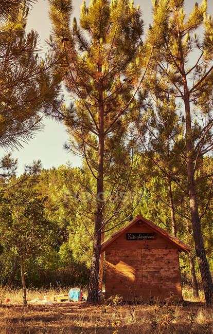 Деревянная хижина в лесу — стоковое фото