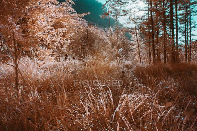 Plantes qui poussent dans la forêt ensoleillée en couleur infrarouge — Photo de stock