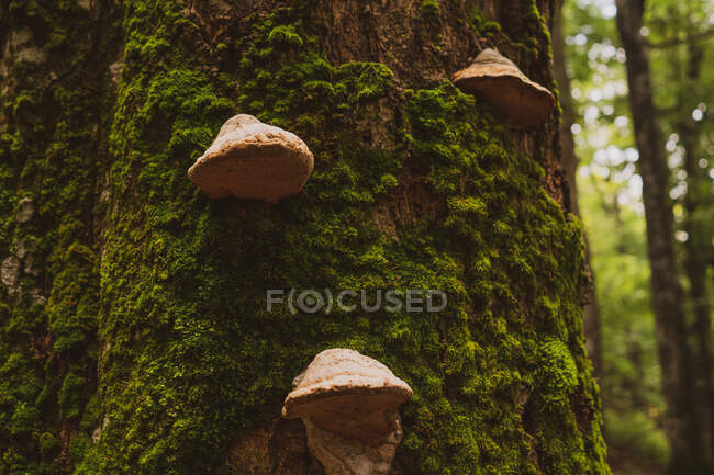Closeup shot of trunk of tree covered with moss and mushrooms in amazing forest in Bulgaria, Balkans — Stock Photo