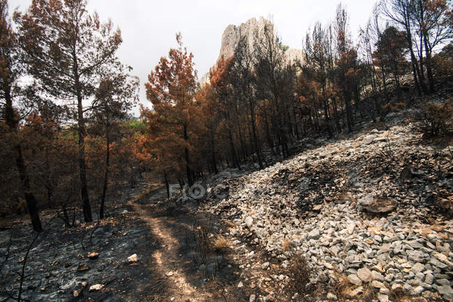 Path among burned trees in wildfire in mountain forest — Stock Photo