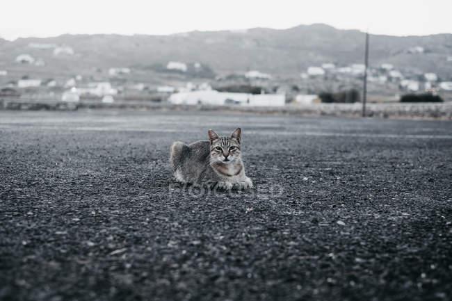 Chat tabby domestique couché sur la route et regardant la caméra — Photo de stock