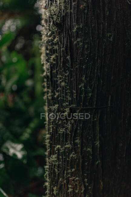 Closeup view of bark of tree trunk in forest on background of green plants — Stock Photo
