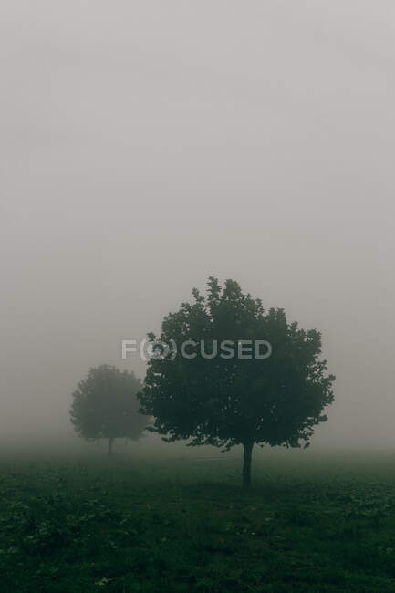 Two green trees with lush foliage standing in vast field covered with gray mist — Stock Photo