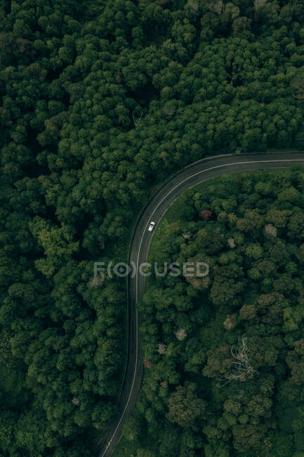 Aerial view of winding motorway with moving car among lush green forest — стоковое фото