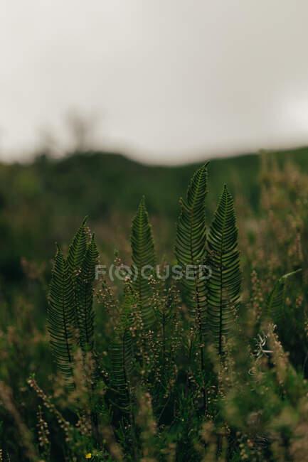 Grünes Gras und Blumen wachsen in einem riesigen Feld auf verschwommenem Hintergrund — Stockfoto