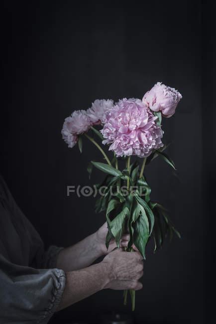 Женские руки держат кучу свежих розовых пионов на темном фоне — стоковое фото
