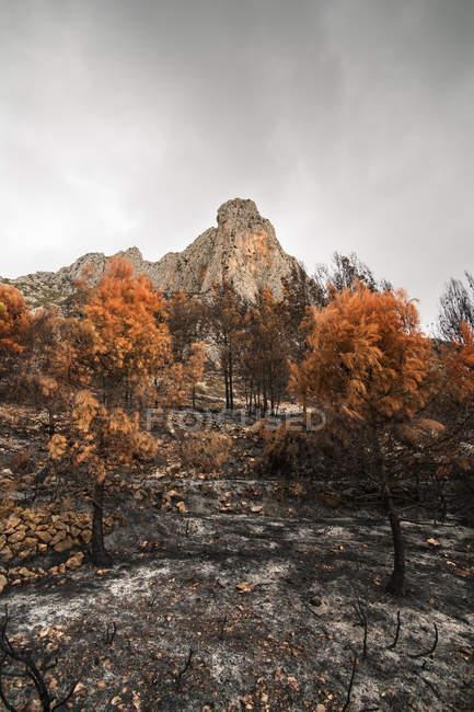 Знищено спалили дерева в гірничо-лісовій — стокове фото