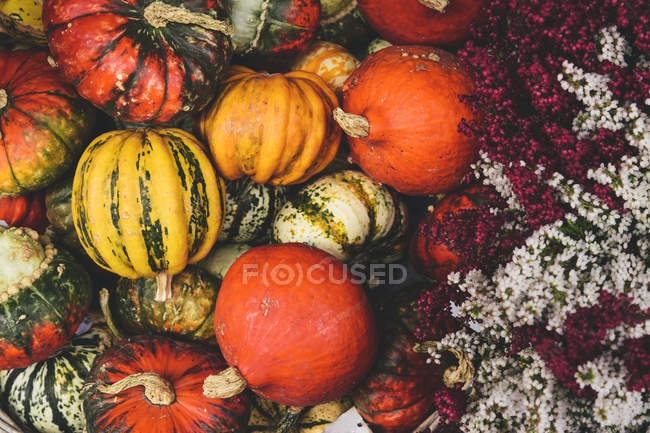Colorful pumpkins in heap decorated with flowers — Stock Photo