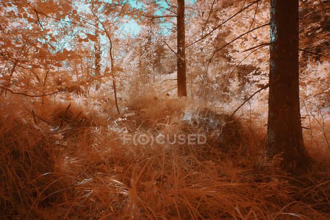 Растения, растущие в солнечном лесу в инфракрасном цвете — стоковое фото