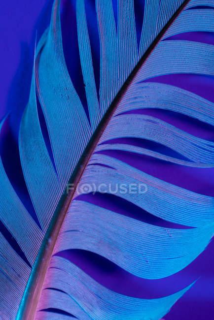 Деталь Пташине перо у фіолетовий освітлення — стокове фото