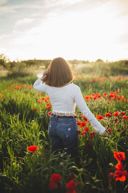 Anonymous woman walking in poppy field — Stock Photo