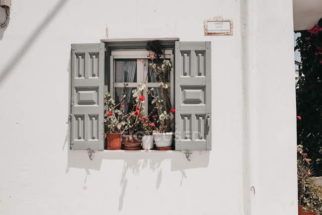 Persiane aperte con fiori in vaso sul davanzale dell'edificio bianco — Foto stock