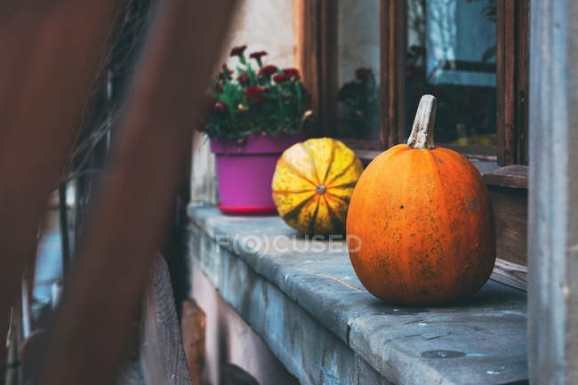Decorated rustic window with pumpkins and potted plant — Stock Photo