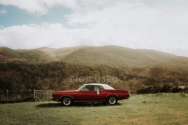 Coche de músculo vintage de color rojo estacionado en césped verde en la naturaleza. - foto de stock