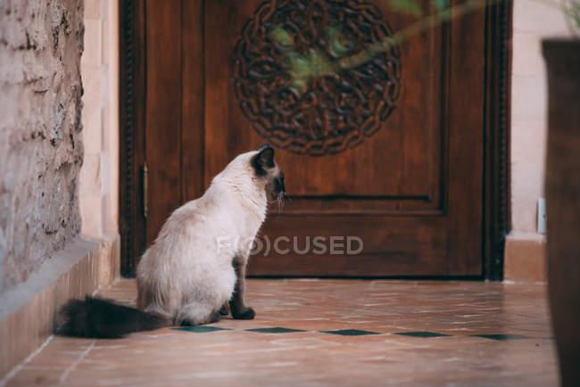 Domestic cute pet cat sitting on floor by wooden door — Stock Photo