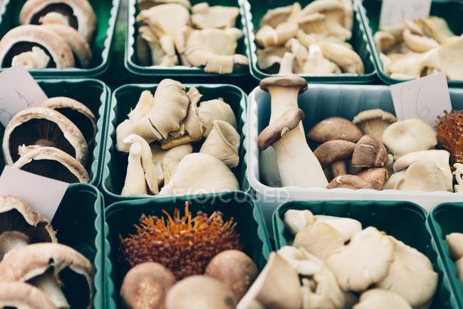 Plastic containers of eatable mushrooms at farmer market — Stock Photo
