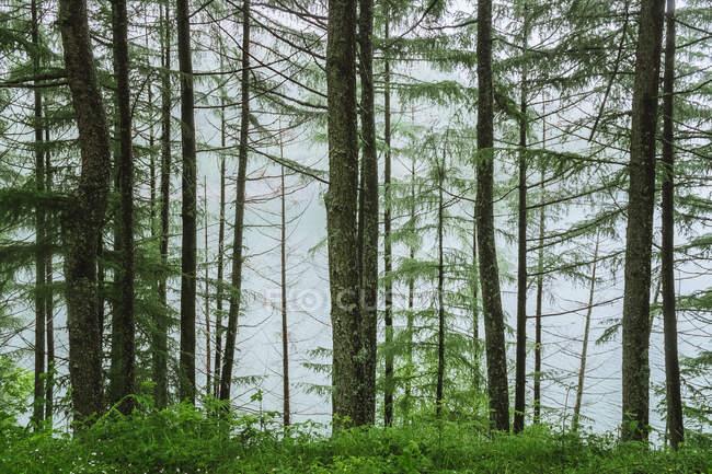 Зеленый лес возле воды — стоковое фото