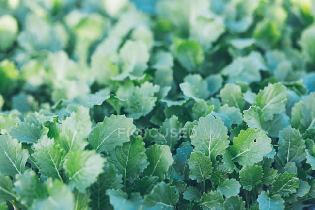 Зелені свіжі трави, що ростуть в сонячному саду — стокове фото