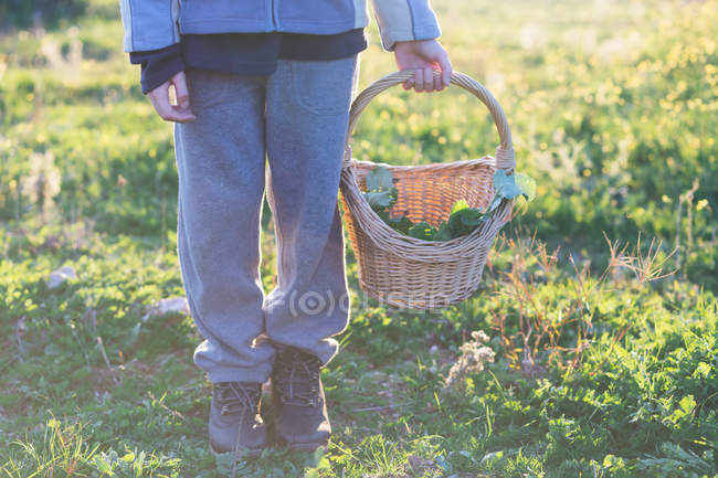 Crop child in sport costume holding basket of green herbs in garden in sunny day — Stock Photo