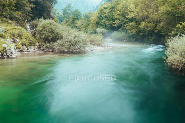 Foschia sopra l'acqua tra alberi verdi e vegetazione — Foto stock