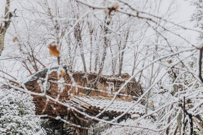 House on trees in winter forest — Stock Photo