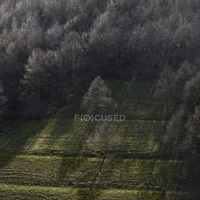 Вид на зеленую долину с голыми деревьями в солнечном свете — стоковое фото