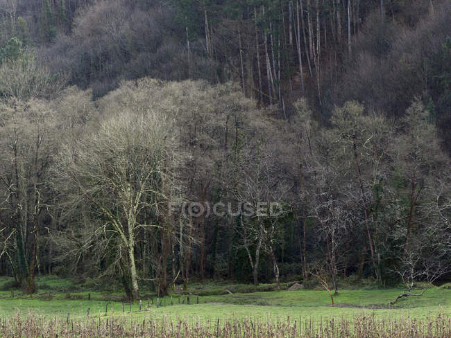 Пейзаж голые деревья на зеленом поле осенью — стоковое фото