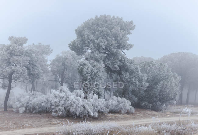 Hoarfrost covering trees and grass in winter morning — Stock Photo