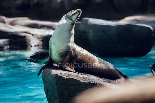Sigillo su pietra nello zoo — Foto stock