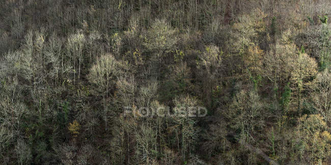 Aerial view of rare leafless trees on slope of mountain in autumn sunlight — Stock Photo
