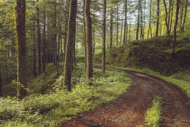 Narrow route running between plants and thin fir trees, Embalse de Alsa, Spain — Stock Photo