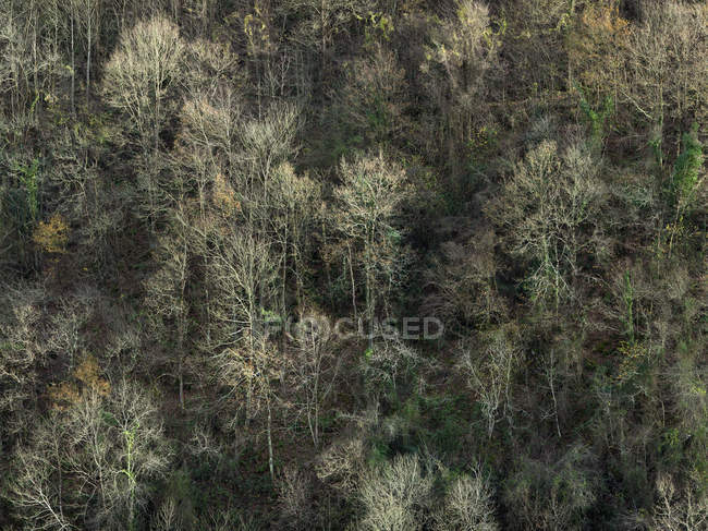 Aerial view of trees growing on slope of mountain in calm light — Stock Photo