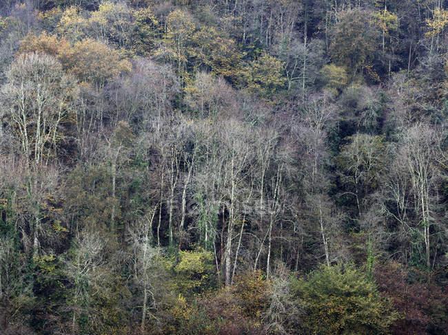 Próprias árvores que crescem na encosta da montanha em luz calma — Fotografia de Stock